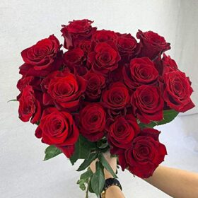 Green Choice Flowers - 24 Premium Red Fresh Roses