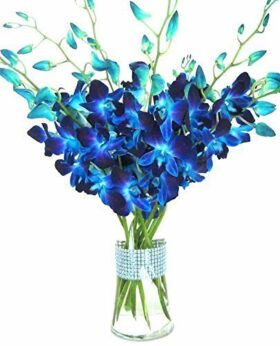 Premium Cut Blue Orchids with Rhinestone Mesh Ribbon Vase